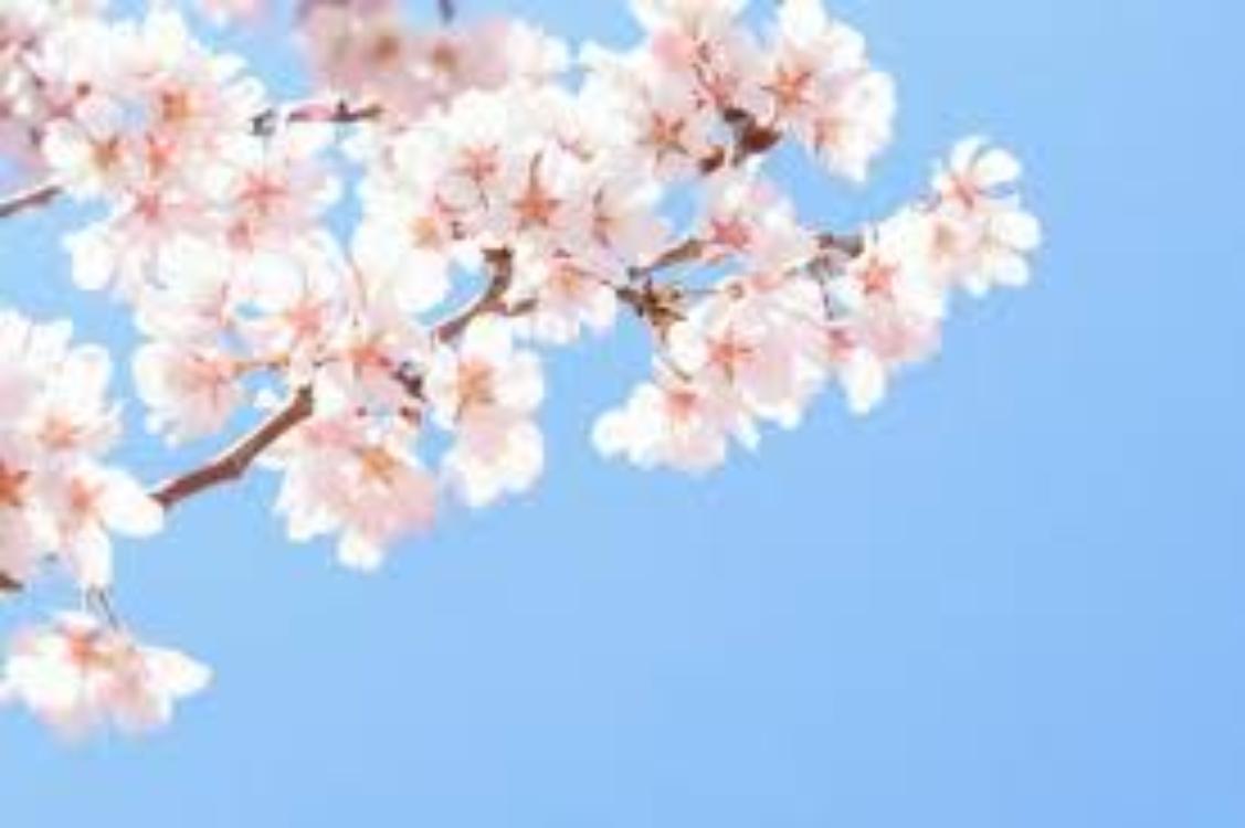 春と新しい生活にむけてチャットレディ始めませんか